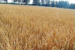 Мировой банк предупредил о рисках стремительного роста цен на еду