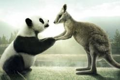 Китай вскоре может запустить торги по паре юань – австралийский доллар