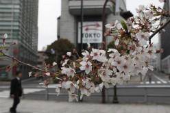 На японском фондовом рынке возобновились «бычьи» настроения