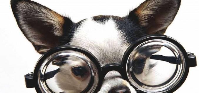Трендовые советники форекс: «Smart»