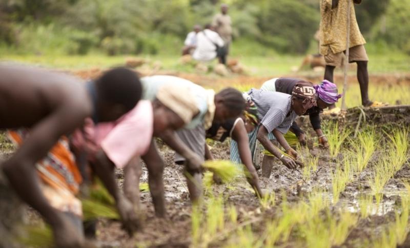 insular poverty