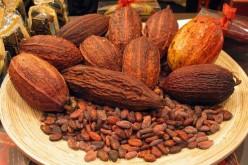Мир ждет дефицит какао